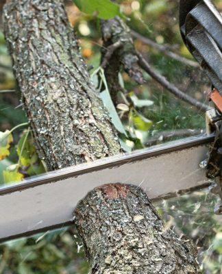Austin tree service